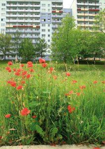 """aus der Broschüre """"Natur findet Stadt"""", herausgegeben vom Agenda21-Büro gemeinsam mit dem Deutschen Verband für Landschaftspflege und dem NABU"""