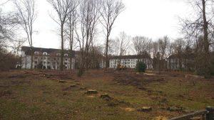 171201_Baumfällung_Reichenbrand
