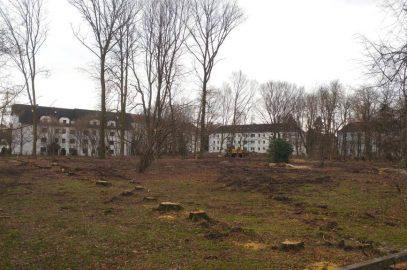 Proteste gegen Baumfällungen in Reichenbrand